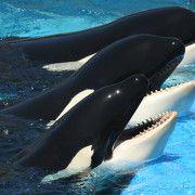 疾運、卜卦與擇時的不同應用-鯨豚救援案例-作者瑪碁斯老師